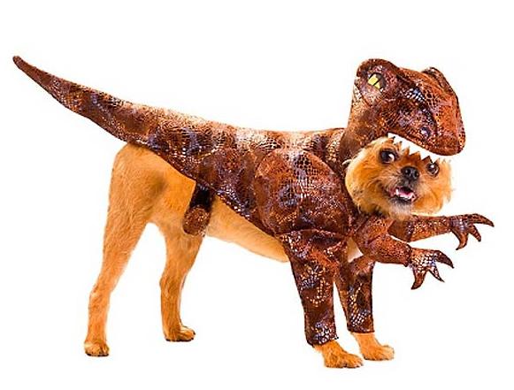 Le déguisement dinosaure vélociraptor pour chien
